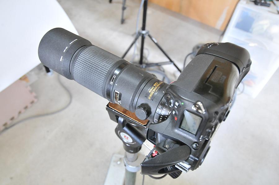 カメラに付属している内蔵のストロボを発光させて撮ってみました